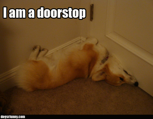 I am a doorstop funny dog corgi picture I am a doorstop