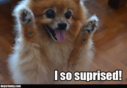 I so suprised funny pomeranian dog picture1 I so suprised!