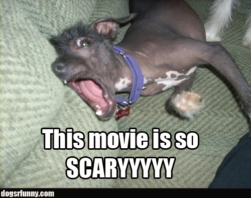 This movie is so scary funny dog picture This movie is so scary