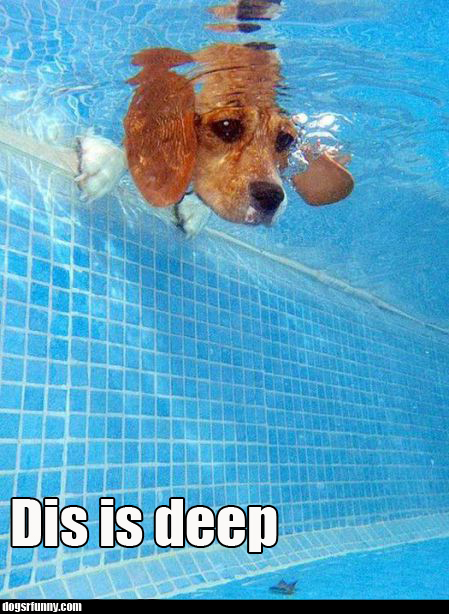 dis is deep  swimming pool water funny dog picture Dis is deep