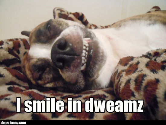 i smile in dweamz dreams funny cute picture dog teeth lol I smile in dweamz