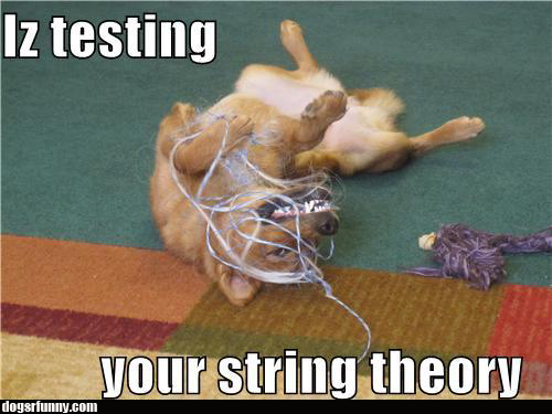 iz testing your string theory dog funny picture Iz testing your string theory