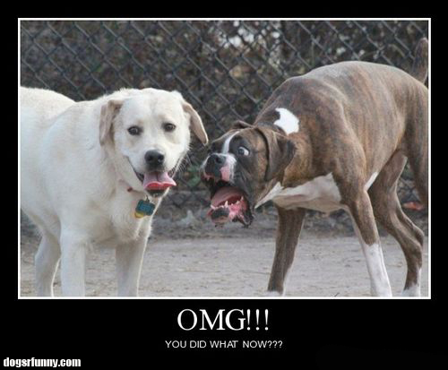 omg you did what funny dogs motivational poster picture OMG! You did what?
