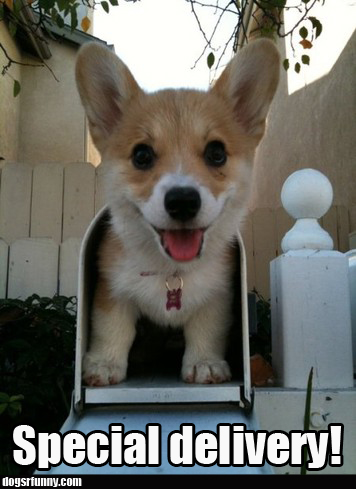 special delivery puppy dog cute funny picture Special Delivery!