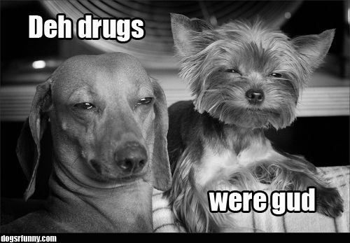 Deh drugs were gud funny dog picture dogsrfunny Deh drugs were gud