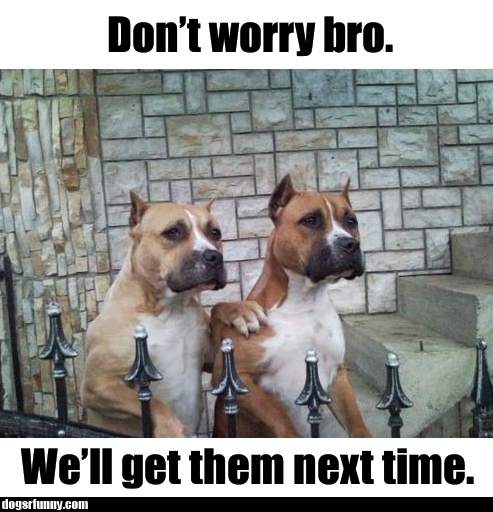 Dont worry bro well get them next time dogsrfunny Dont worry bro well get them next time