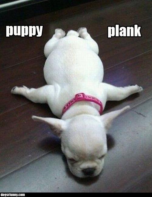 Puppy planking dogsrfunny Puppy plank