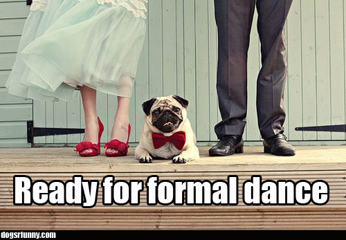 Ready for formal dance funny dog pug picture Ready for formal dance