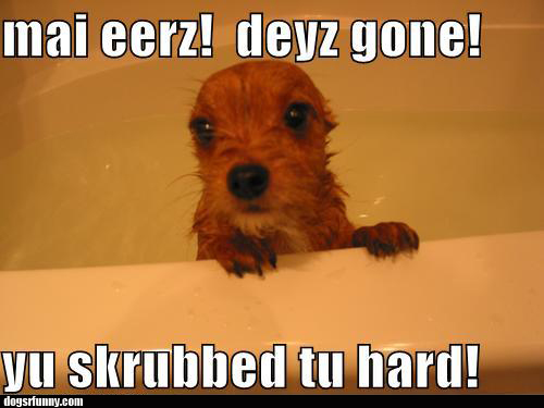 yu skrubbed tu hard funny dog picture dogsrfunny Yu skrubbed tu hard