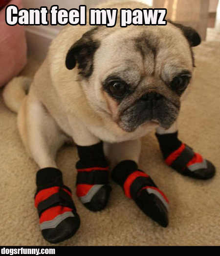pugboots Cant feel my pawz