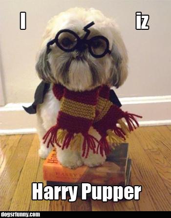 harry pupper I iz Harry Pupper