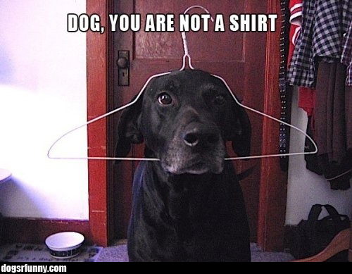 notashirt Dog, you are not a shirt